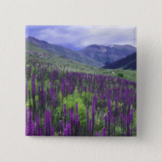 Mountains and wildflowers in alpine meadow, 2 15 cm square badge
