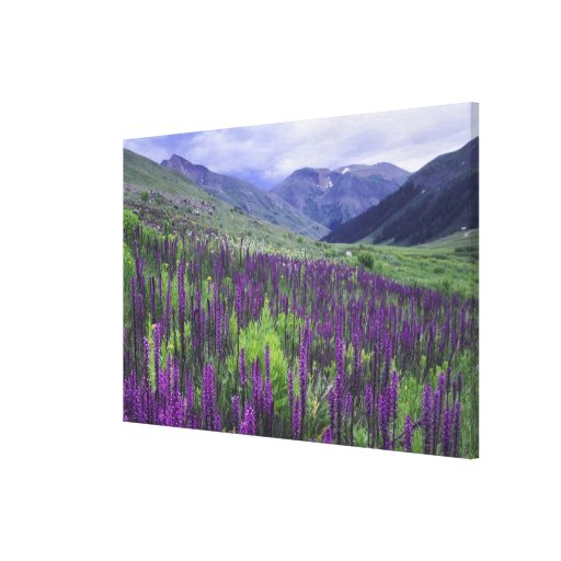 Mountains and wildflowers in alpine meadow, 2 stretched canvas print