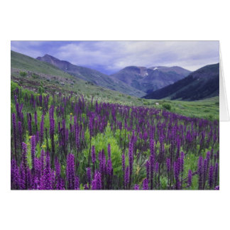 Mountains and wildflowers in alpine meadow, 2 greeting card