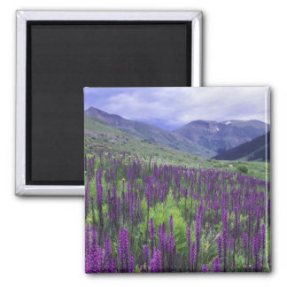Mountains and wildflowers in alpine meadow, 2 magnet