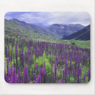 Mountains and wildflowers in alpine meadow, 2 mouse mat