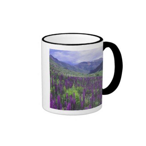 Mountains and wildflowers in alpine meadow, 2 coffee mug