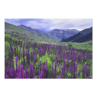 Mountains and wildflowers in alpine meadow, 2 photo print