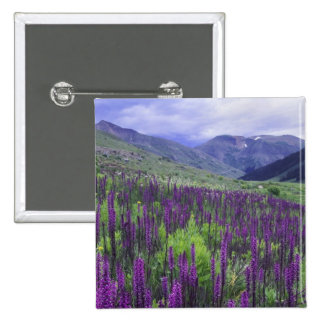 Mountains and wildflowers in alpine meadow 2 pin
