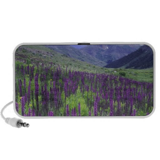 Mountains and wildflowers in alpine meadow, 2 laptop speakers