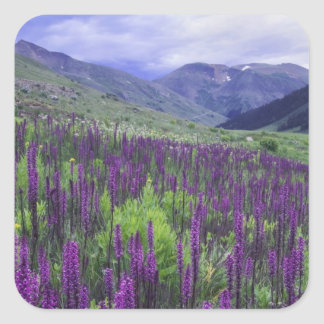 Mountains and wildflowers in alpine meadow, 2 square sticker