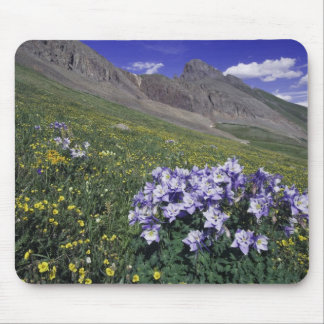 Mountains and wildflowers in alpine meadow, Blue Mouse Mat