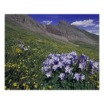 Mountains and wildflowers in alpine meadow, Blue Poster
