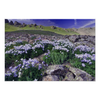 Mountains and wildflowers in alpine meadow, poster