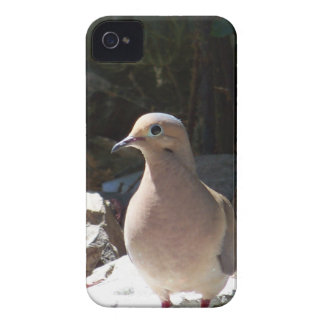 Mourning Dove iPhone 4 Covers