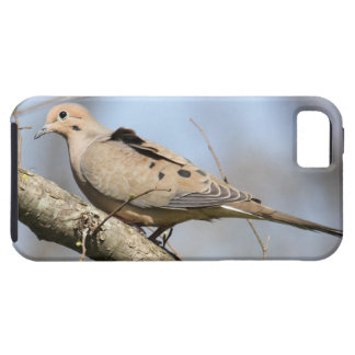 Mourning Dove iPhone 5 Cases