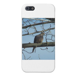 mourning dove case for iPhone 5