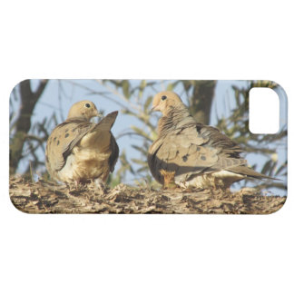 Mourning Dove Couple iPhone 5 Cases