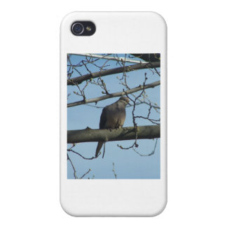 mourning dove iPhone 4/4S cover