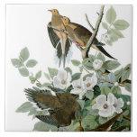 Mourning Dove, John James Audubon