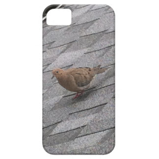 Mourning Dove on a Rooftop iPhone 5 Cases