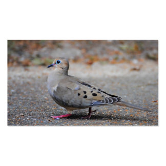 Mourning Dove Taking a Walk Pack Of Standard Business Cards