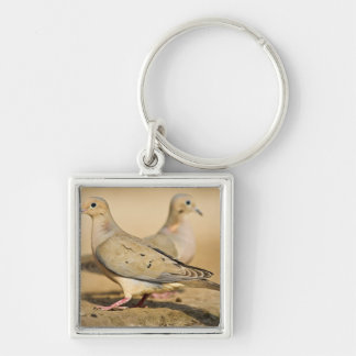 Mourning Dove (Zenaida macroura) adults on Key Ring