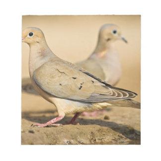 Mourning Dove (Zenaida macroura) adults on Notepad