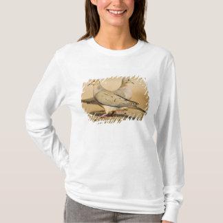 Mourning Dove (Zenaida macroura) adults on T-Shirt