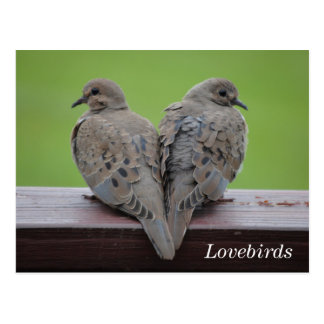 Mourning Doves Postcard