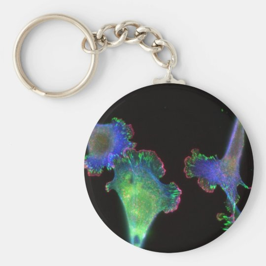 Mouse embryonic fibroblasts basic round button key ring