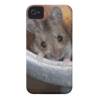 Mouse in a teapot iPhone 4 Case-Mate case