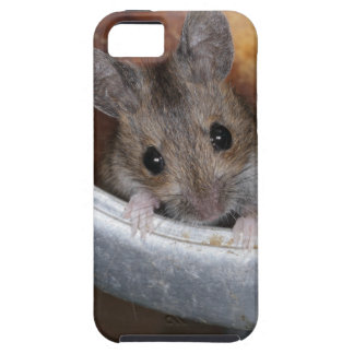 Mouse in a teapot iPhone 5 cases