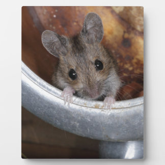 Mouse in a teapot photo plaques