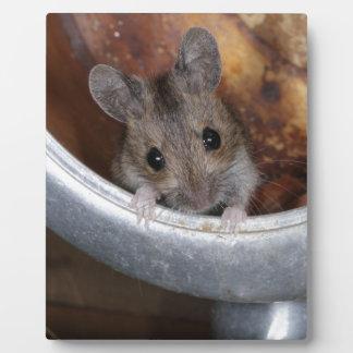 Mouse in a teapot plaque