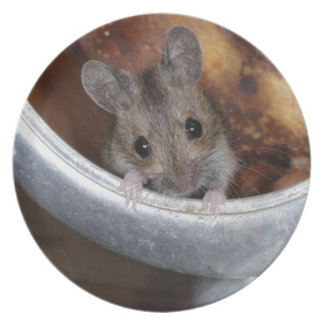 Mouse in a teapot plate