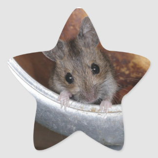 Mouse in a teapot star sticker