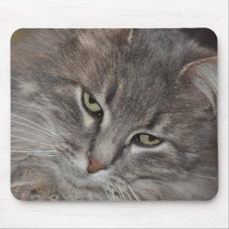 MOUSE MAT CAT