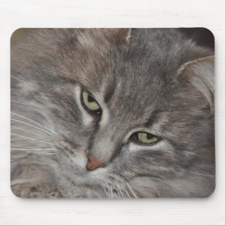 MOUSE MAT CAT