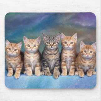 mouse mat cats
