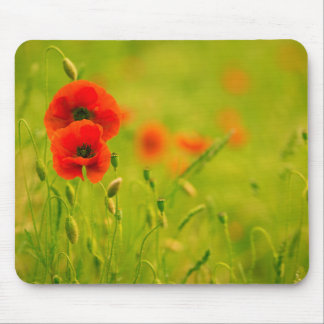 Mouse mat, Spring and flowers of poppy Mouse Mat