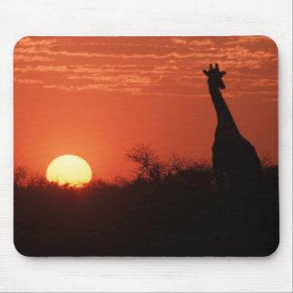 Mouse PAD giraffe sunset