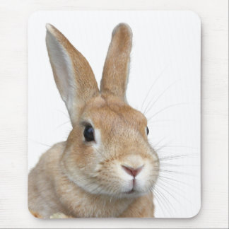 Mouse pad of face of rabbit, No.08