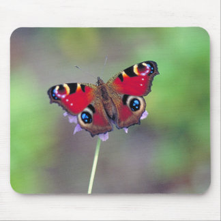 Mouse pad of peafowl butterfly