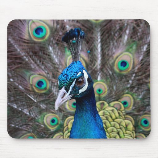 Mouse pad of the Indian peafowl
