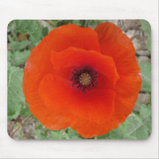 Mouse Pad. Poppy (Poppy) Mouse Mat