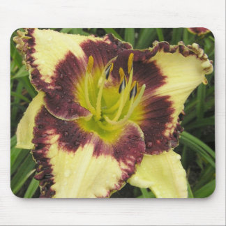 Mouse Pad with Purple eyed daylily in the morning