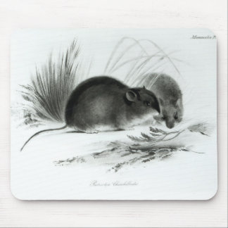 Mouse, Tierra del Fuego, South America c.1832-36 Mouse Pad