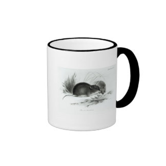 Mouse, Tierra del Fuego, South America c.1832-36 Ringer Coffee Mug