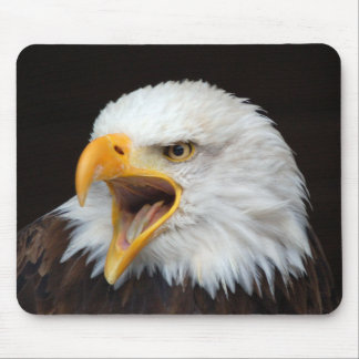 Mousepad bald eagle photo Jean Louis Glineur