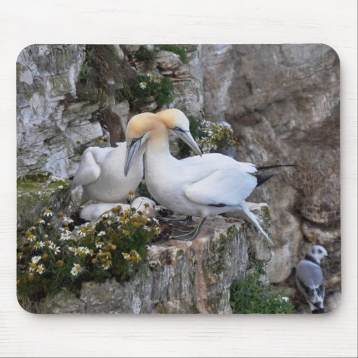 Mousepad: Gannets and Flowers
