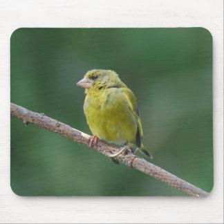 MOUSEPAD green finch - photo: Jean Louis Glineur