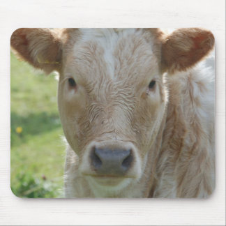 Mousepad of cows of cattle of calves - photo Jean