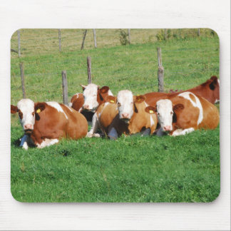 Mousepad of cows of cattle of calves photo Jean l.