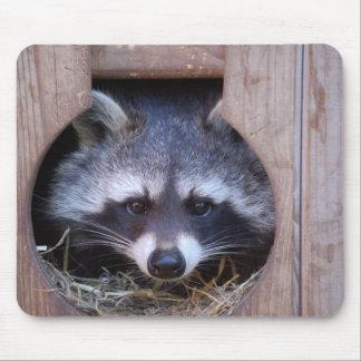 Mousepad Racoon raccoon